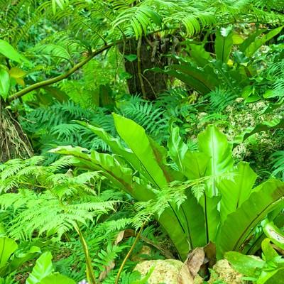 「緑の庭」の写真素材