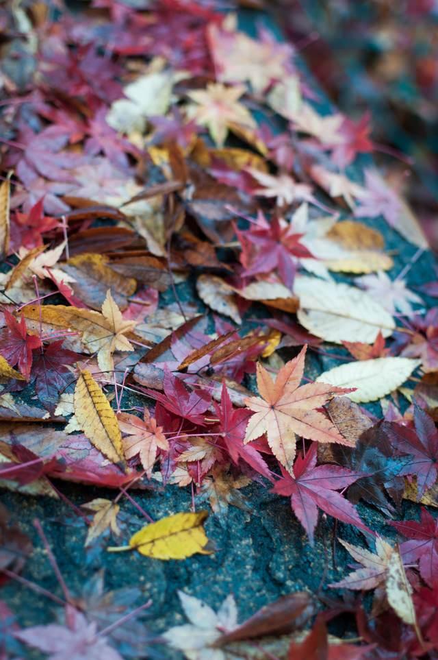 雨に濡れた木の葉の写真
