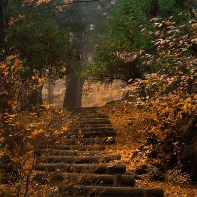 「紅葉がキレイな山段」の写真素材
