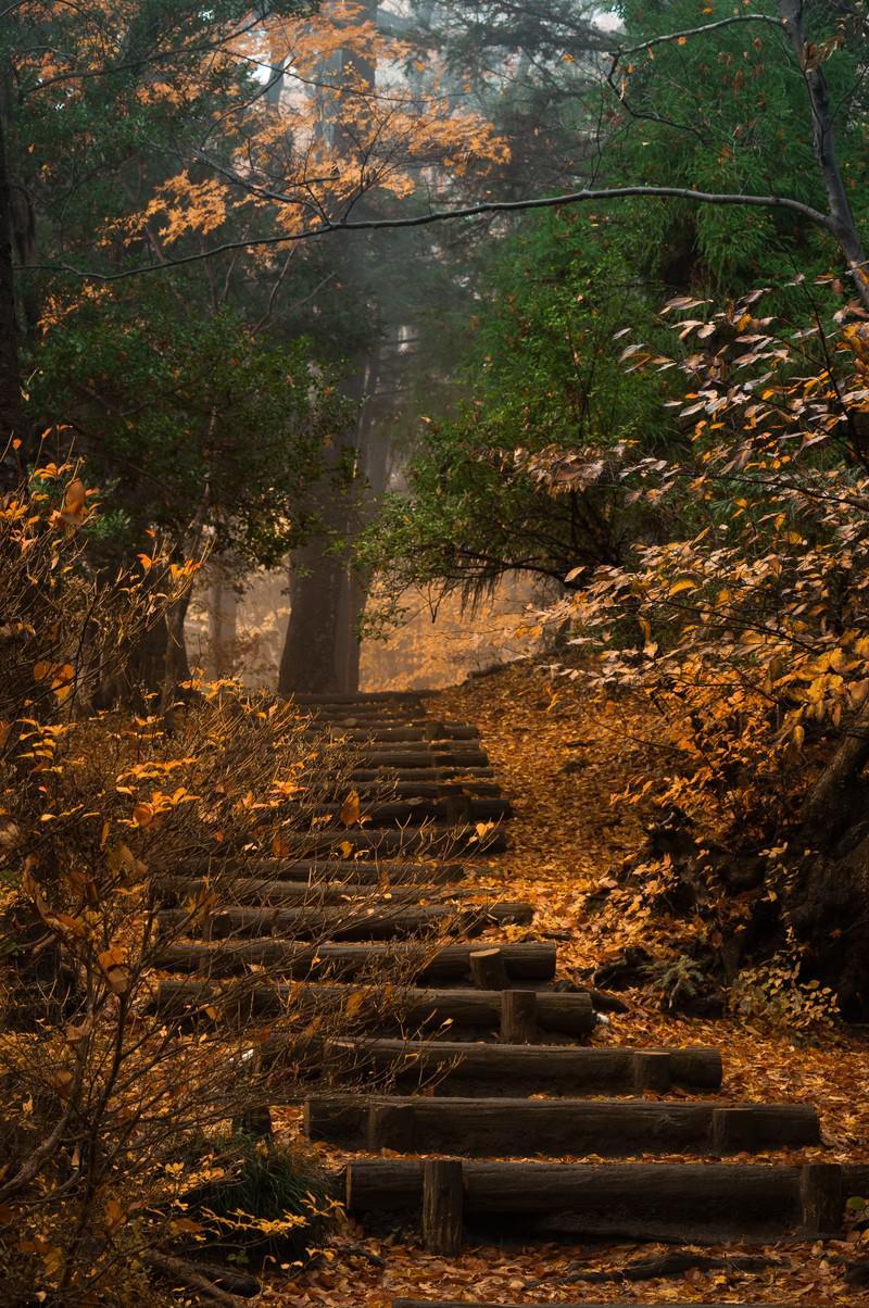 「紅葉がキレイな山段」の写真