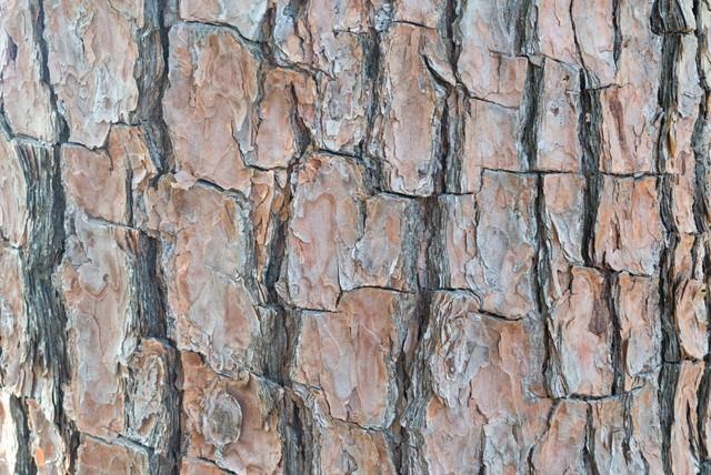 樹皮(テクスチャ)の写真