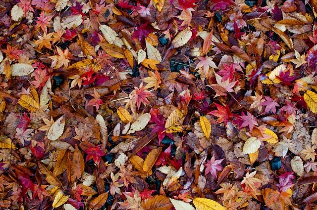 落葉した葉のテクスチャーの写真