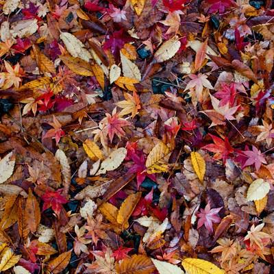 「落葉した葉のテクスチャー」の写真素材