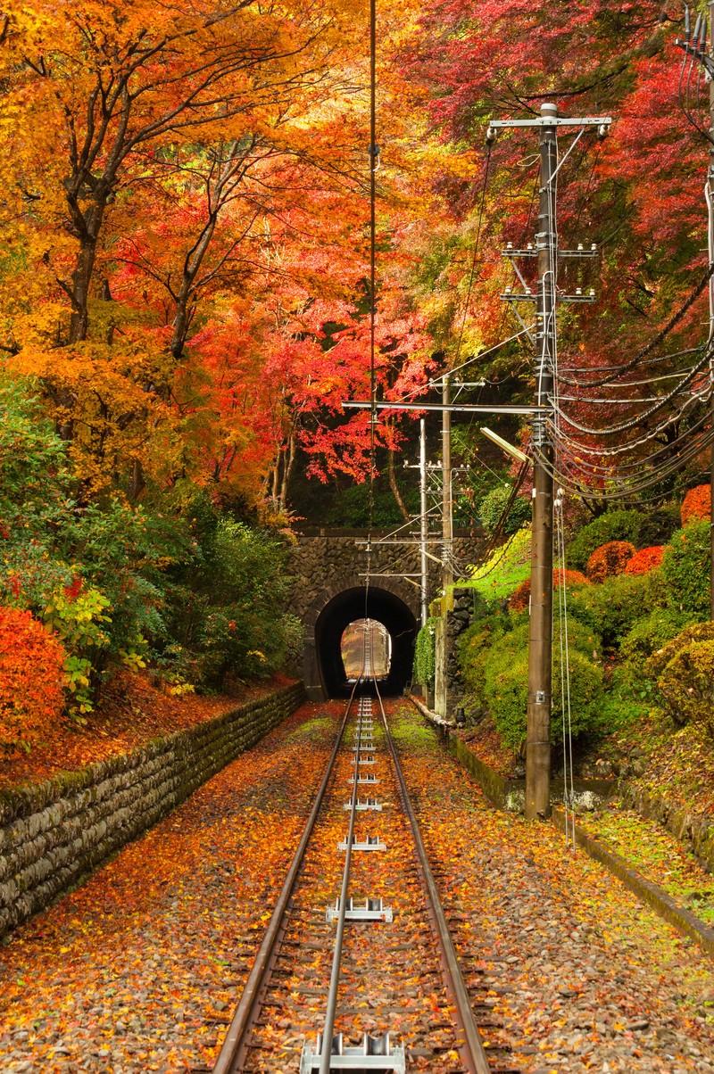 「高尾山の紅葉」の写真