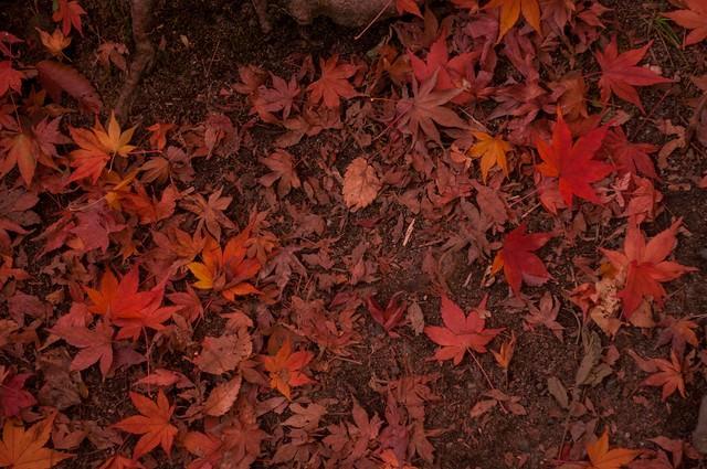 赤朽葉の写真