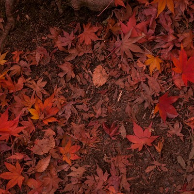 「赤朽葉」の写真素材