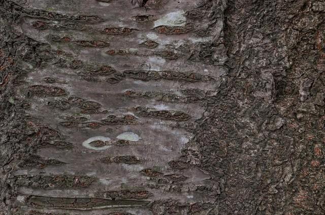 樹皮(テクスチャー)の写真
