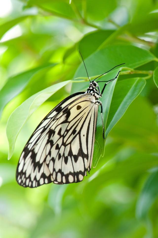 葉に止まる蝶の写真