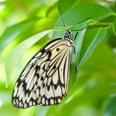 「葉に止まる蝶」の写真素材