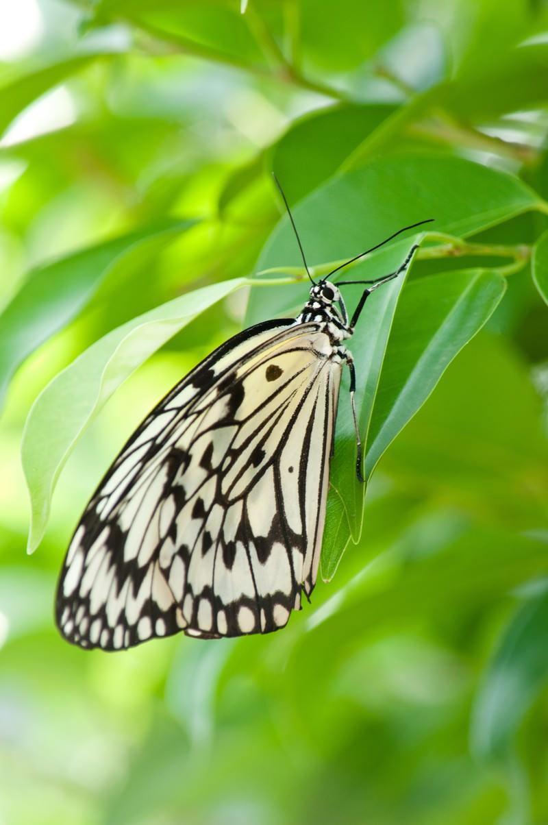 「葉に止まる蝶」の写真