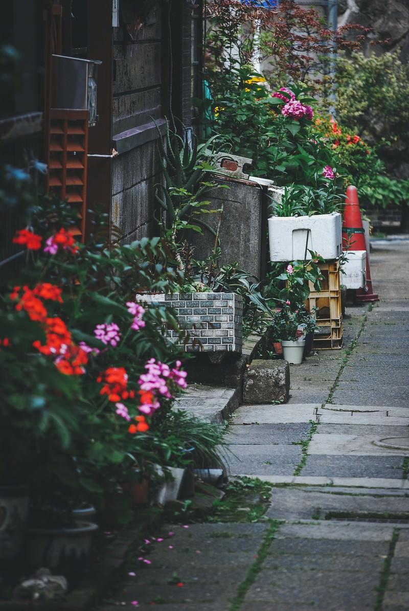 「路地裏」の写真