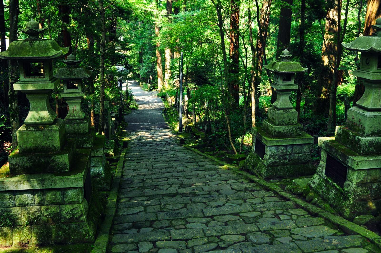 「参道」の写真