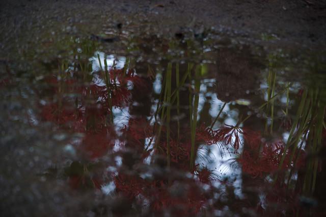 雨上がりの秋の道の写真