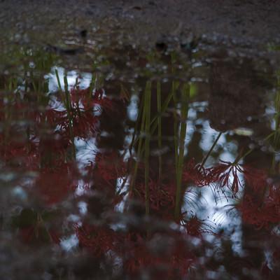 「雨上がりの秋の道」の写真素材