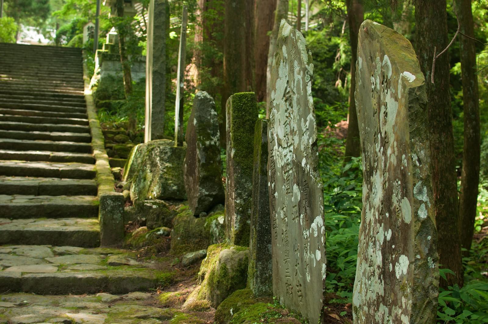 「森の奥へ続く道」の写真