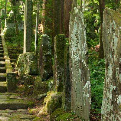 森の奥へ続く道の写真