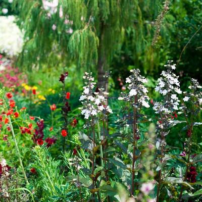 花盛りの庭の写真