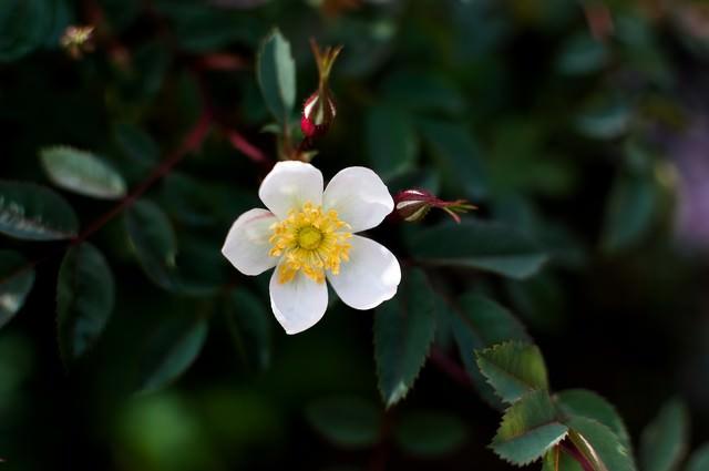 小さい花の写真
