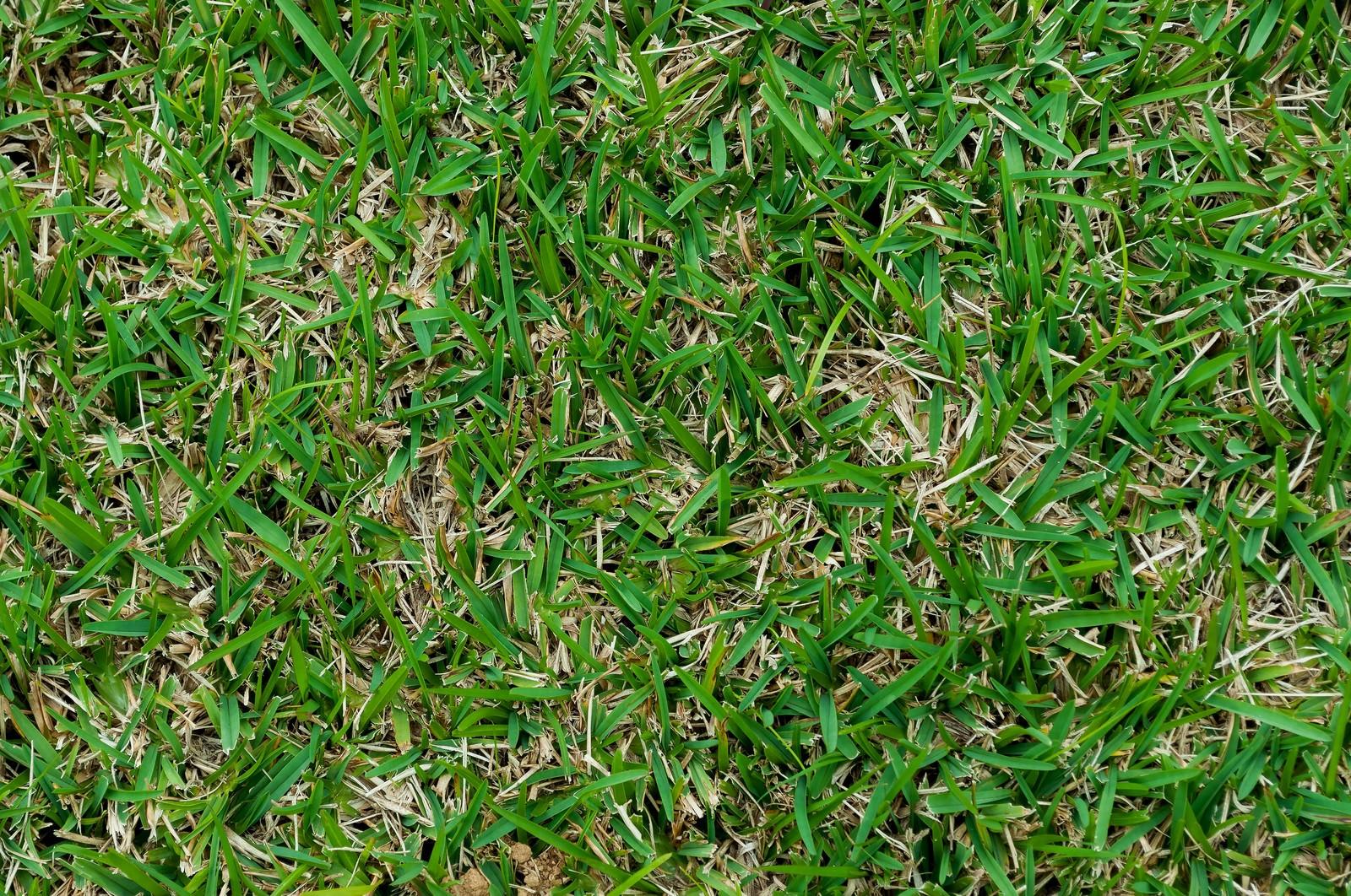 「芝生のテクスチャー」の写真