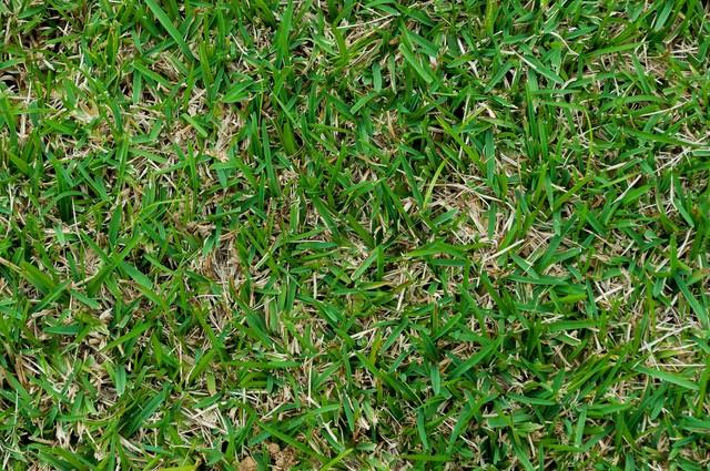 芝生のテクスチャーの写真