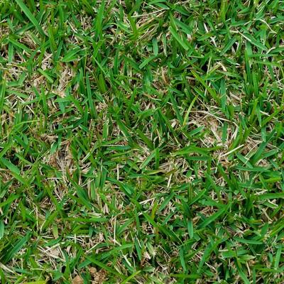 「芝生のテクスチャー」の写真素材