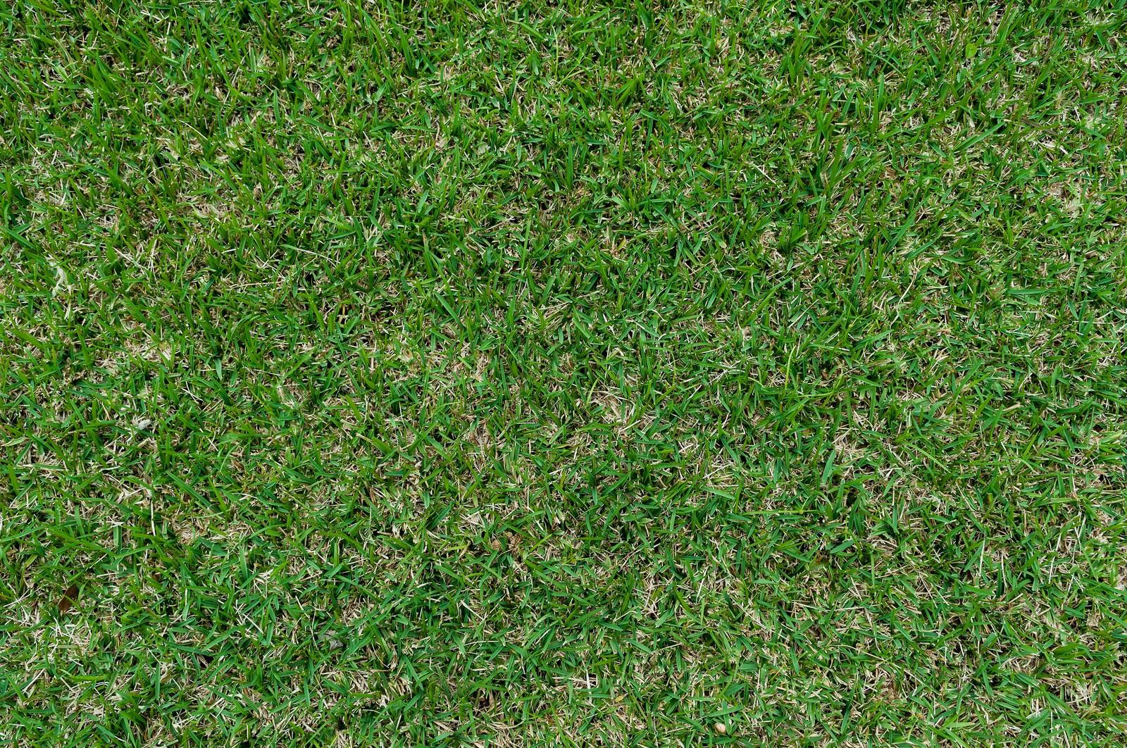 「芝のテクスチャー」の写真