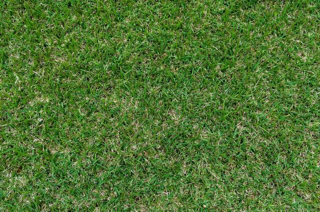 芝のテクスチャーの写真