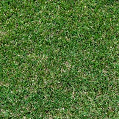 「芝のテクスチャー」の写真素材