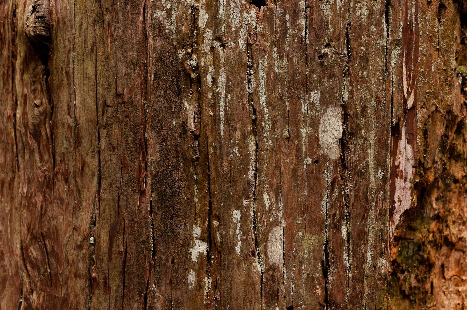 「大木の樹皮(テクスチャー)大木の樹皮(テクスチャー)」のフリー写真素材を拡大