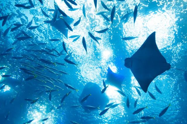空を泳ぐの写真
