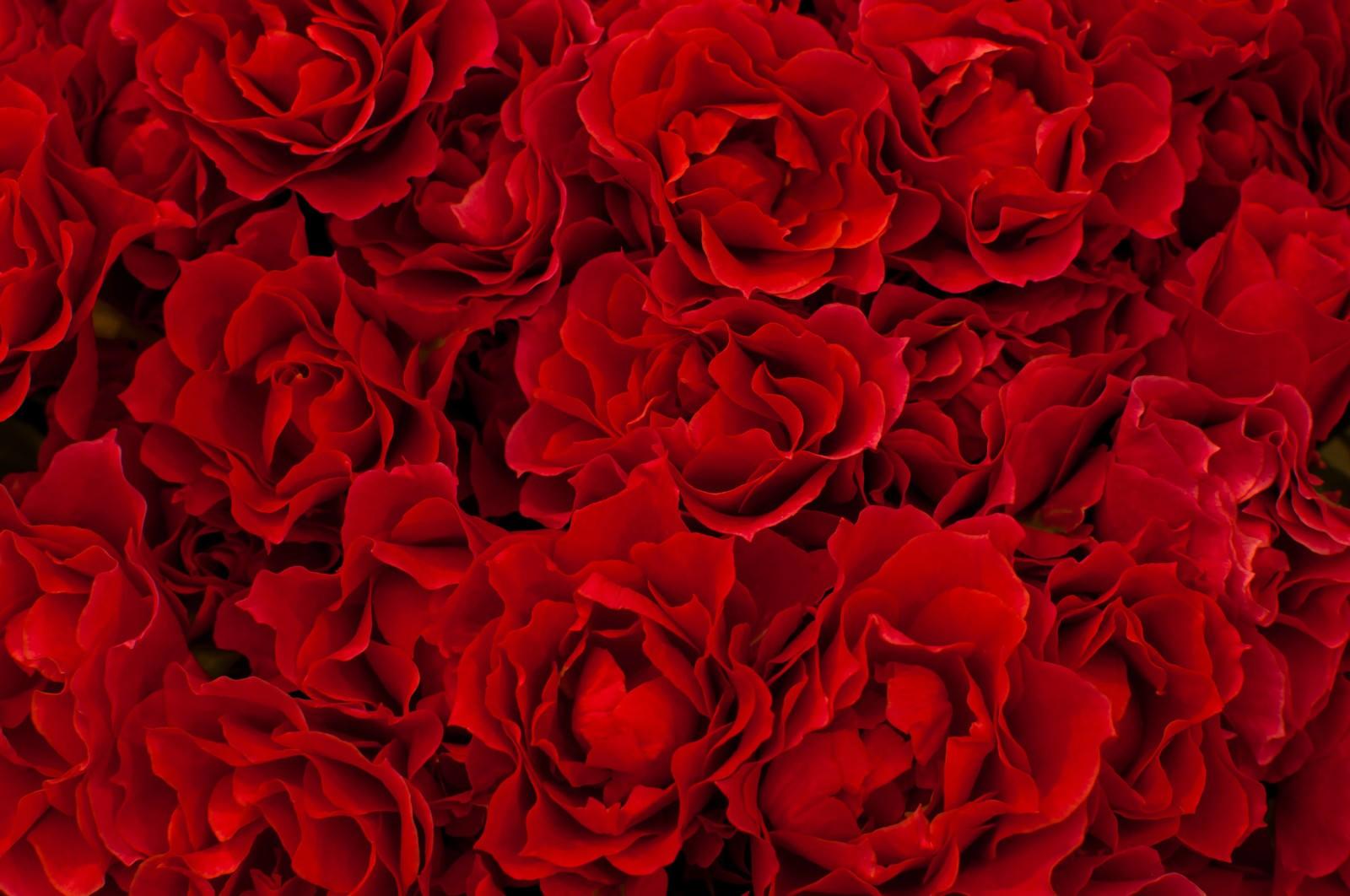 「赤いバラのテクスチャー」の写真