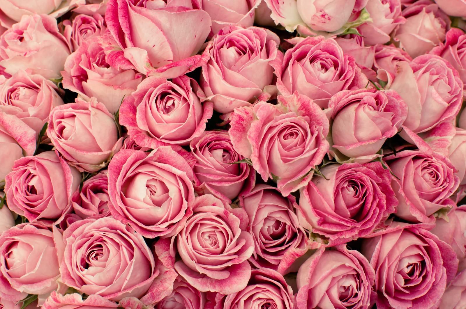 「ニュアンスカラーの薔薇(テクスチャー)」の写真