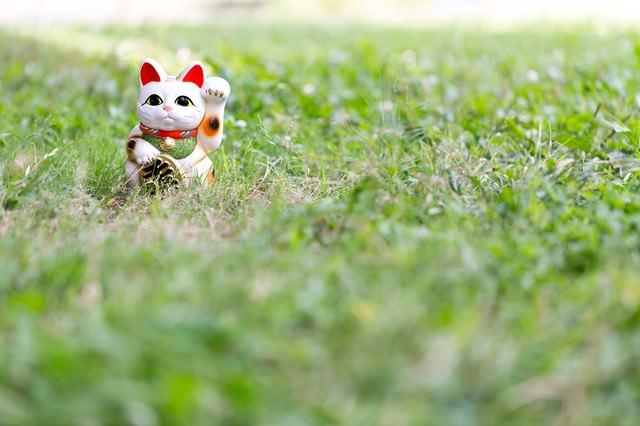 野原と招き猫の写真