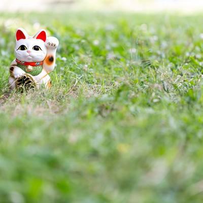 「野原と招き猫」の写真素材