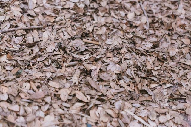 一面の落葉(枯れ葉)の写真