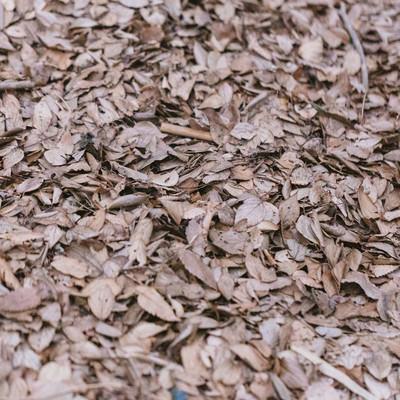 「一面の落葉(枯れ葉)」の写真素材