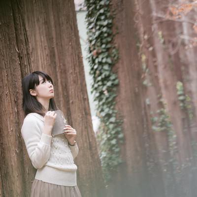 「森に迷い込んだ読書美女」の写真素材