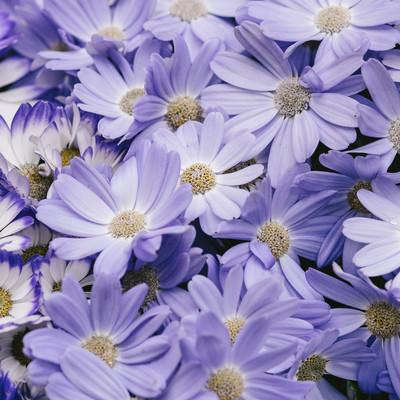 「紫色のお花」の写真素材