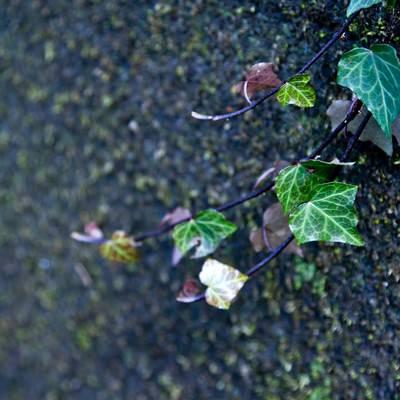 「湿った場所の蔓」の写真素材