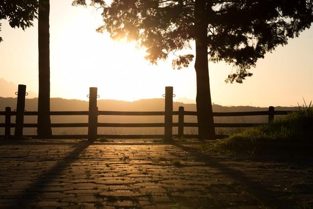 日差しと公園の写真