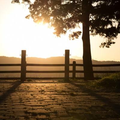「日差しと公園」の写真素材