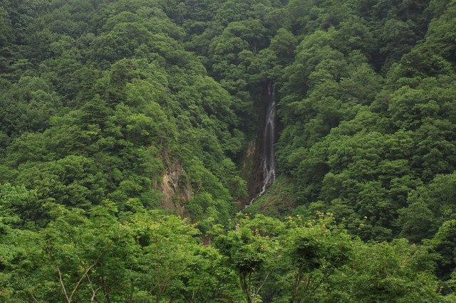 山林の中で流れる滝の写真