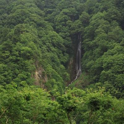 「山林の中で流れる滝」の写真素材