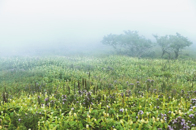 霧立ち込める伊吹山の写真
