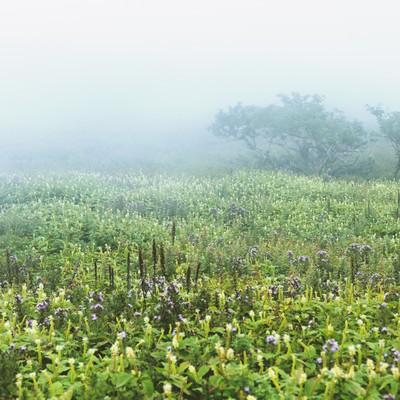 「霧立ち込める伊吹山」の写真素材