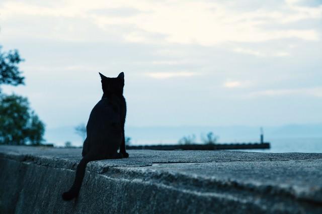 埠頭から海を見る黒猫の写真