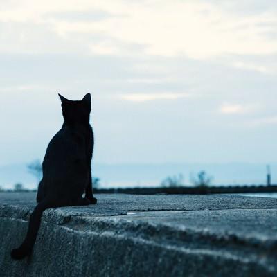 「埠頭から海を見る黒猫」の写真素材