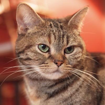 猫カフェの猫ちゃんの写真