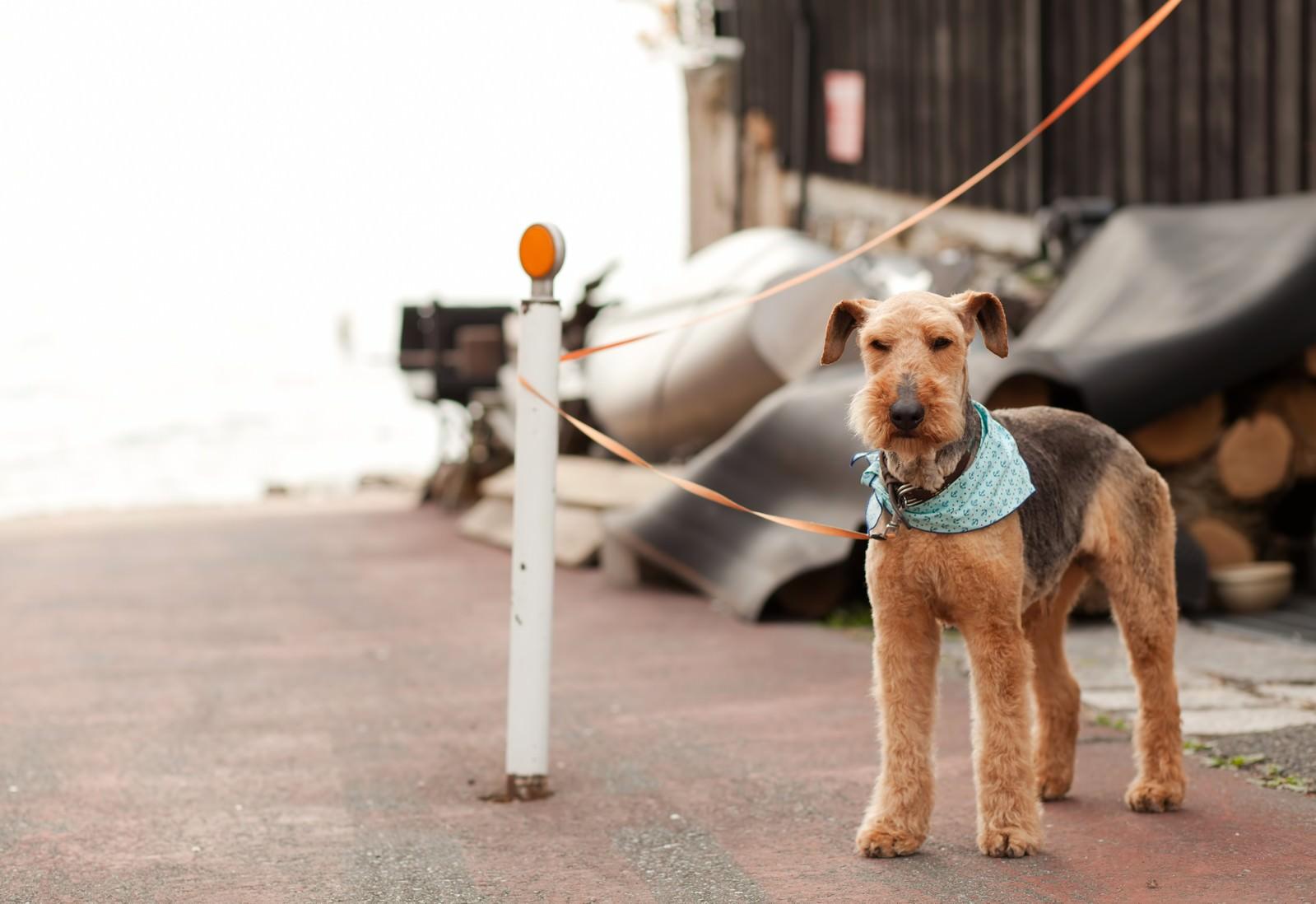 「飼い主を待つ犬」の写真