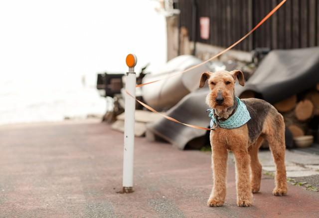 飼い主を待つ犬の写真